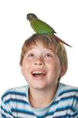Jak wybrać papugę?